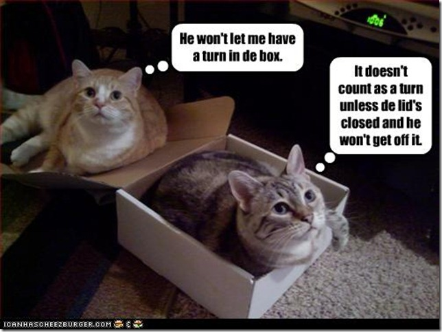 funny-pictures-cats-try-to-share-box