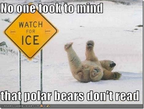 funny-pictures-polar-bear-slips-on-ice