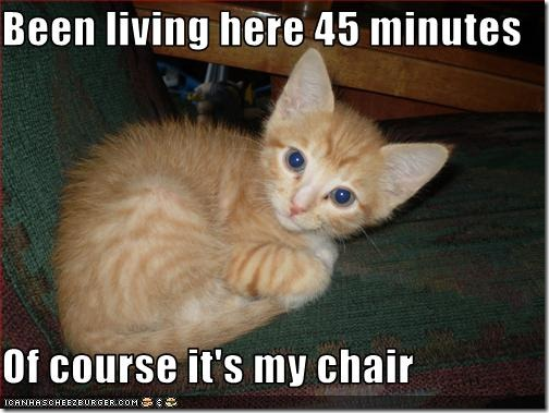 funny-pictures-kitten-has-chair
