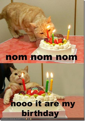 funny_pictures_cat_wants_his_birthday_cake1_no_title_just_LOLs-s429x612-81455-580
